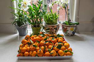 Hintergrundbilder Viel Orchideen Mandarine Blumentopf Lebensmittel