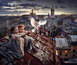 Bilder Taube Dach Unscharfer Hintergrund Jungen Kleine Mädchen kind