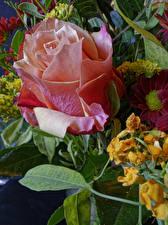 Papel de Parede Desktop Rosa De perto flor