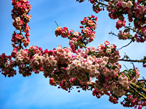 Pictures Spring Flowering trees Closeup Branches Nature