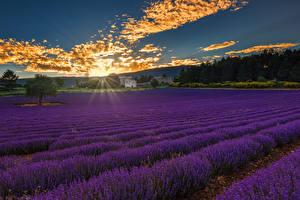 Fotos Morgendämmerung und Sonnenuntergang Acker Lavendel Lichtstrahl Wolke