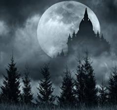 Bilder Tempel Nacht Fichten Mond Silhouetten Natur