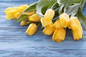 Fotos Tulpen Blumensträuße Bretter Gelb Blüte