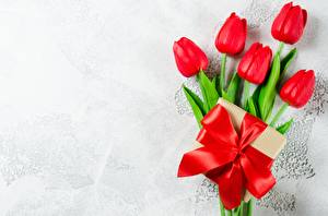 Pictures Tulip Bowknot Red Template greeting card flower