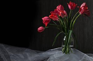 Photo Tulip Vase Red flower