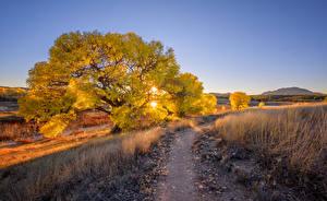 Fotos USA Abend Bäume Sonne Weg Prescott, Arizona Natur