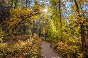 Hintergrundbilder Vereinigte Staaten Wald Bäume Weg Sonne West Fork, Sedona, Arizona Natur
