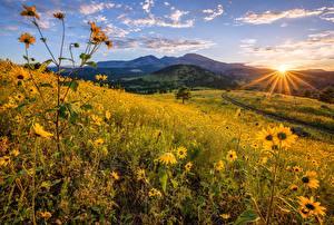Bilder USA Berg Sonnenblumen Morgen Landschaftsfotografie Grünland Sonne Lichtstrahl Flagstaff, Arizona Natur