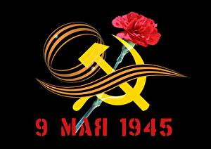 Pictures Victory Day 9 May Dianthus Ribbon Hammer and sickle
