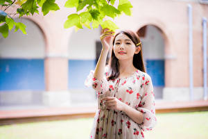 Images Asian Frock Hands Branches Foliage Blurred background Girls