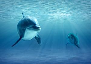 Картинка Дельфины Подводный мир Лучи света Два животное