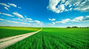 桌面壁纸,,田地,道路,天空,云,