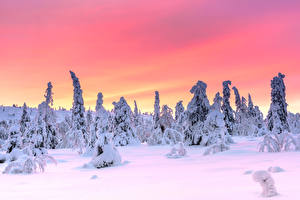 Image Finland Lapland region Winter Evening Snow Trees Riisitunturi National Park, Posio, Finnish Lapland Nature