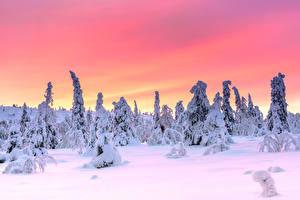 Desktop hintergrundbilder Finnland Lappland Landschaft Winter Abend Schnee Bäume Riisitunturi National Park, Posio, Finnish Lapland Natur
