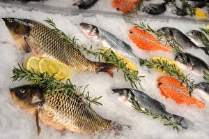 Images Fish - Food Ice Food
