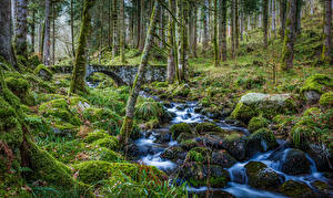 Wallpapers France Forests Stones Moss Creeks Alsace Nature