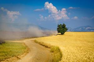 Bakgrunnsbilder Frankrike Provence Åker Vei Trær  Natur