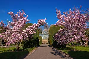 Images Germany Spring Gardens Flowering trees Bush Stuttgart Magnolia garden Nature