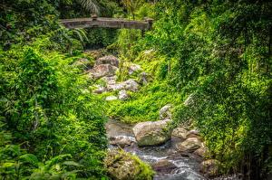 Hintergrundbilder Indonesien Wald Stein Brücke Bäche Tampaksiring, Bali Natur