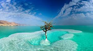 桌面壁纸,,以色列,海,天空,树,云,Dead Sea, Neve Zohar,