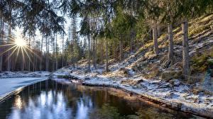 Fotos Italien Wald Bäume Sonne Schnee Lichtstrahl Veneto, Cortina d'Ampezzo Natur