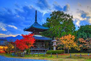 Image Japan Kyoto Park Pagodas Autumn HDRI Trees Rays of light Seiryo-ji Nature
