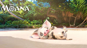 Hintergrundbilder Vaiana – Das Paradies hat einen Hak Disney Hausschwein Pua 3D-Grafik