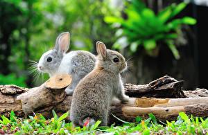 Картинка Кролик Боке 2 Бревно