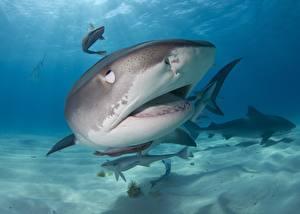 Image Sharks Underwater world