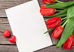 Wallpaper Tulips Template greeting card Red Flowers