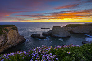 Bilder Vereinigte Staaten Sonnenaufgänge und Sonnenuntergänge Küste Gänseblümchen Felsen Horizont Shark Fin Cove Natur