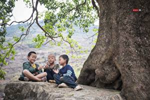 Wallpapers Asian Three 3 Boys Sitting Bald Branches Children