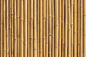 Bilder Bambus Textur Viel Natur