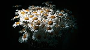 Fotos Kamillen Sträuße Schwarzer Hintergrund Blumen