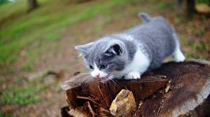 Pictures Cat Kittens Tree stump Blurred background