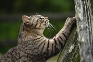 Bilder Hauskatze Pfote Bokeh ein Tier