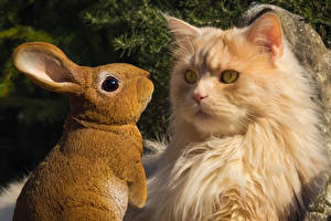 Fotos & Bilder Katze Kaninchen Blick Tiere