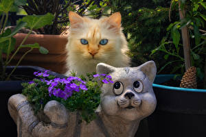 Wallpaper Cats Two Glance Animals