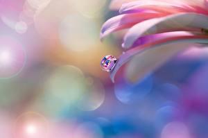 Фотографии Крупным планом Капля Лепестки Цветы