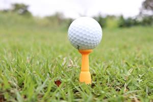 Bilder Großansicht Golf Gras Bokeh Ball