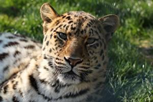 Fotos & Bilder Großansicht Kopf Blick Schnauze Tiere