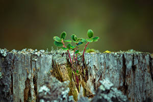 Photo Closeup Tree stump Branches Foliage Nature