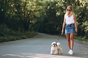 Bureaubladachtergronden Honden Onscherpe achtergrond Blond meisje Bolognezer Bril Gaat jonge vrouw