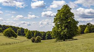 Tapety na pulpit Anglia Łąki Niebo Drzewa Chmury Tylers Green przyroda
