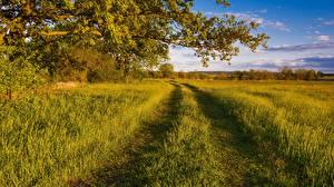 Hintergrundbilder Acker Wege Sommer Ast Gras