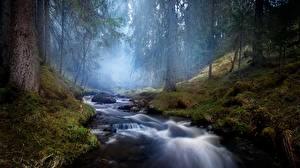 Bilder Wald Stein Bach Nebel Laubmoose
