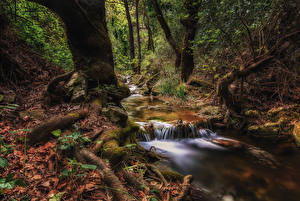 Photo Greece Forests Trunk tree Brook Moss Athens Nature