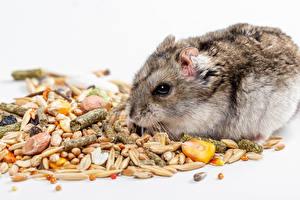 Hintergrundbilder Hamster Weißer hintergrund Getreide Tiere