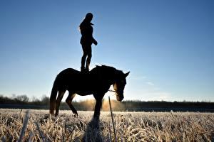 Desktop hintergrundbilder Pferde Felder Sonnenaufgänge und Sonnenuntergänge Silhouette Reif niederschlag Gras Tiere