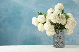 Fotos & Bilder Hortensien Sträuße Vase Blumen